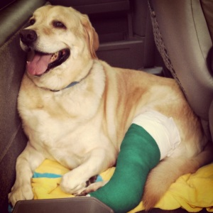 Bo with his cast