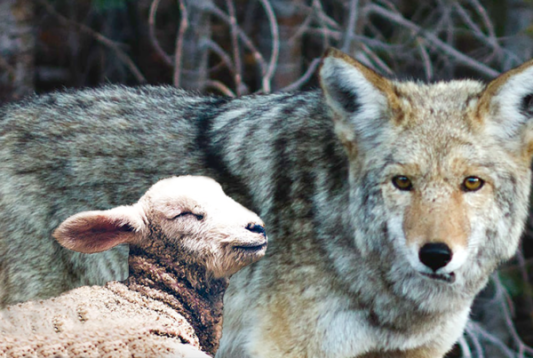 Dec-16-The-Wolf-and-the-Lamb-600x403